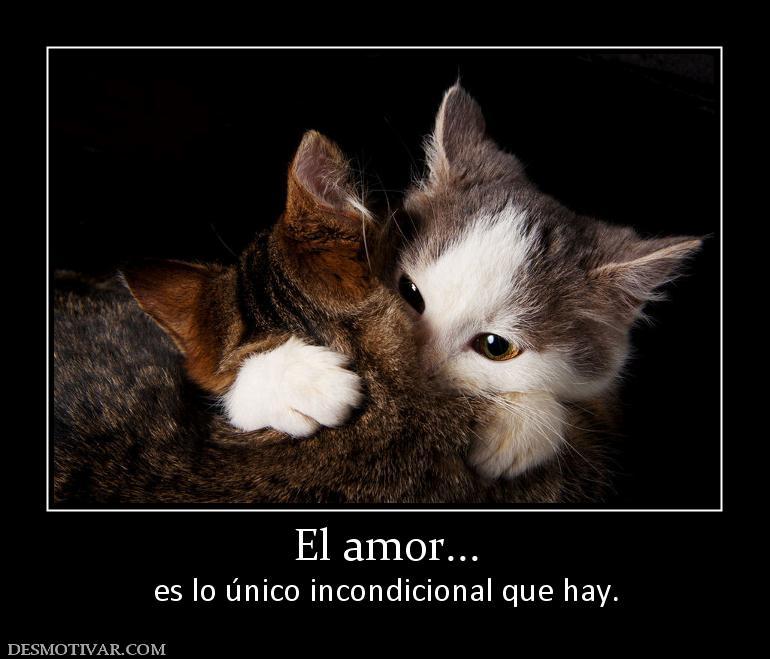 Desmotivaciones el amor es lo nico incondicional que hay el amor es lo nico incondicional que hay altavistaventures Images