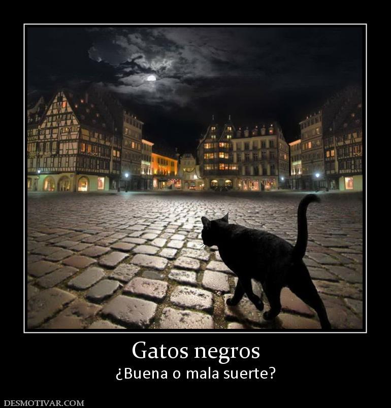 Gatos negros ¿Buena o mala suerte?