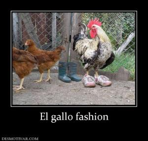 El gallo fashion