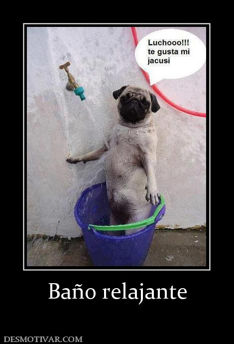 Ideas Baño Relajante:Etiquetas: Mascotas Graciosos Perros Fotos
