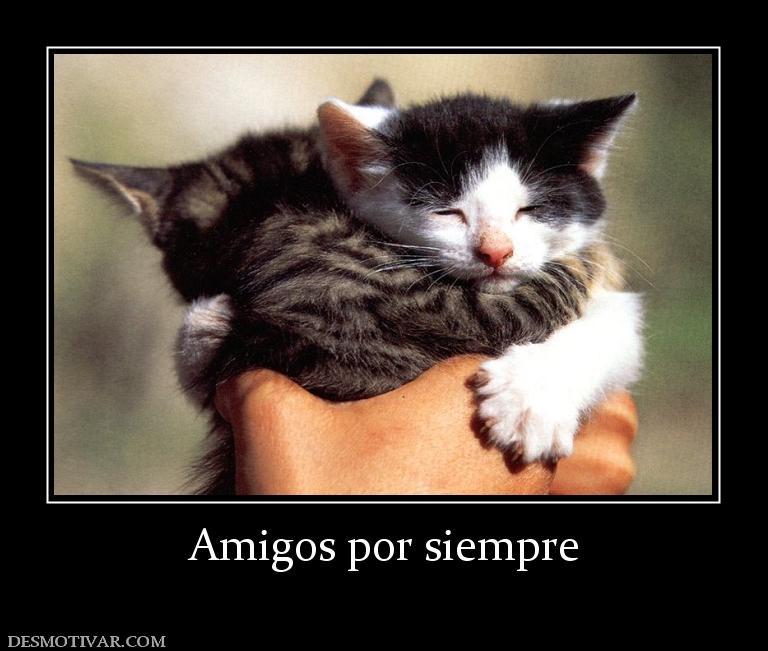 Imagenes De Amigos Por Siempre Newhairstylesformen2014 Com