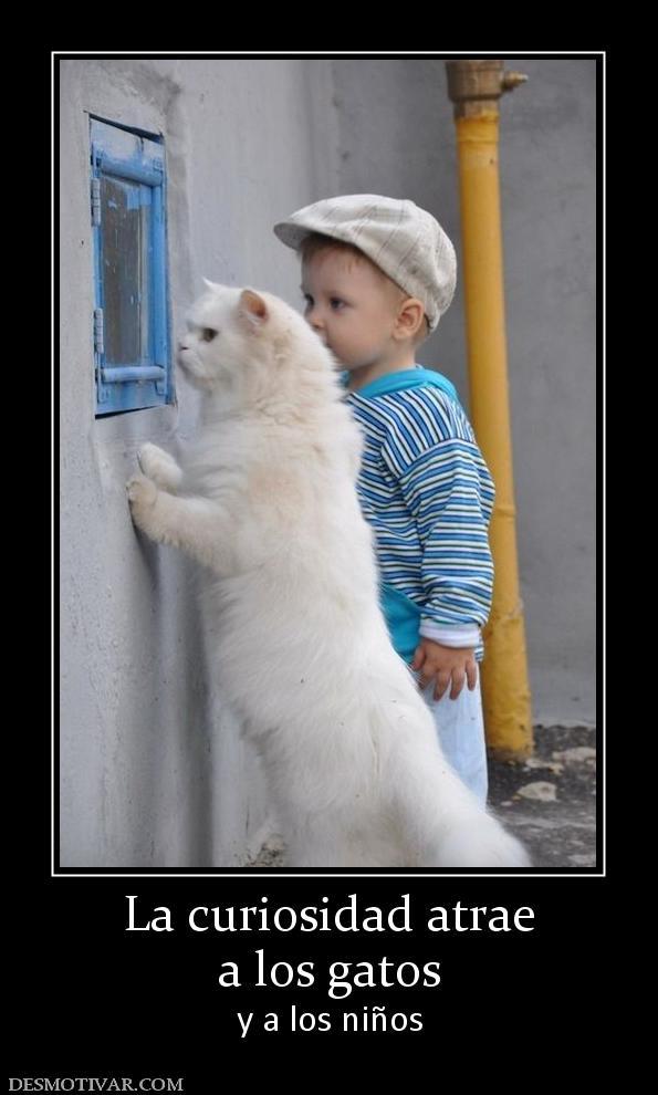 LAMENTABLE, PERO CIERTO... 163103_la-curiosidad-atrae-a-los-gatos