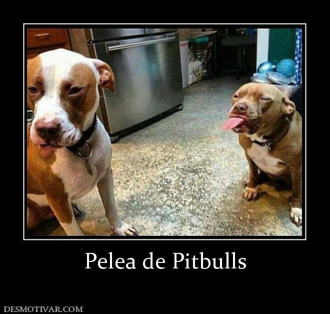 Desmotivaciones Pelea de Pitbulls