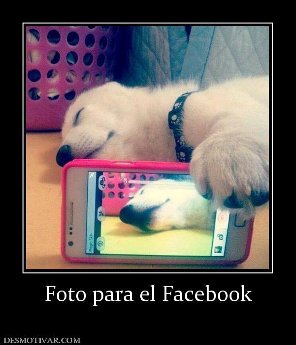 Desmotivaciones Foto para el Facebook