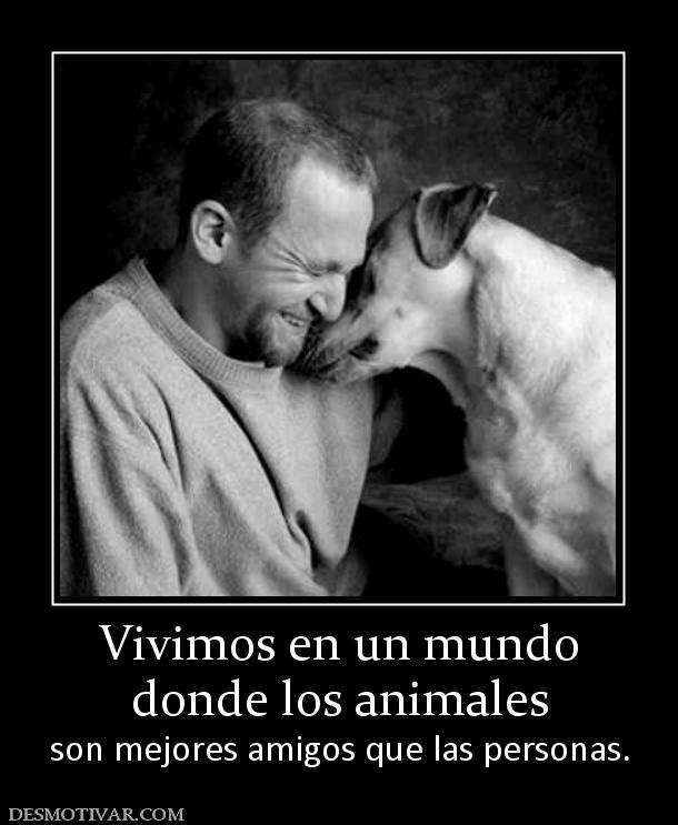 desmotivaciones vivimos en un mundo donde los animales son