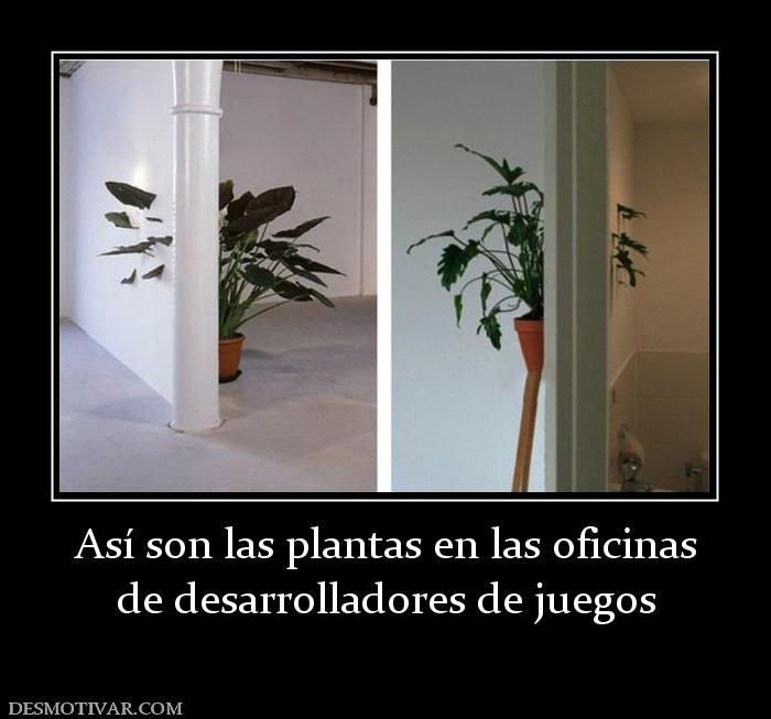 Desmotivaciones as son las plantas en las oficinas de for Follando en las oficinas