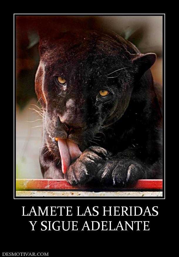 LAMETE LAS HERIDAS Y SIGUE ADELANTE