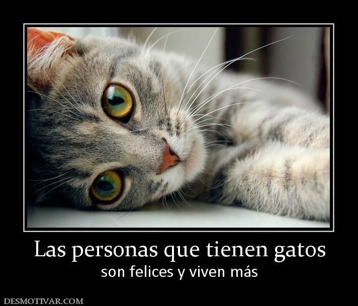 Etiquetas Gatos Fotografia Frases Las Personas Que Tienen Gatos Son