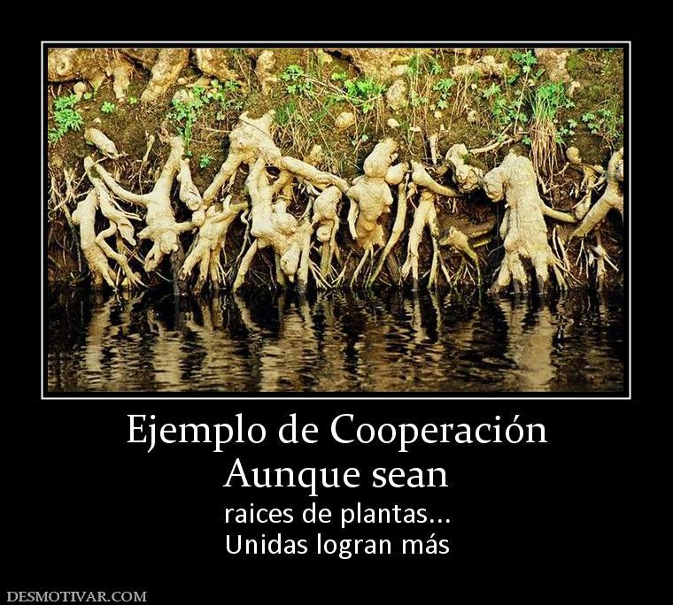 Ejemplo de Cooperación Aunque sean raices de plantas... Unidas logran ...