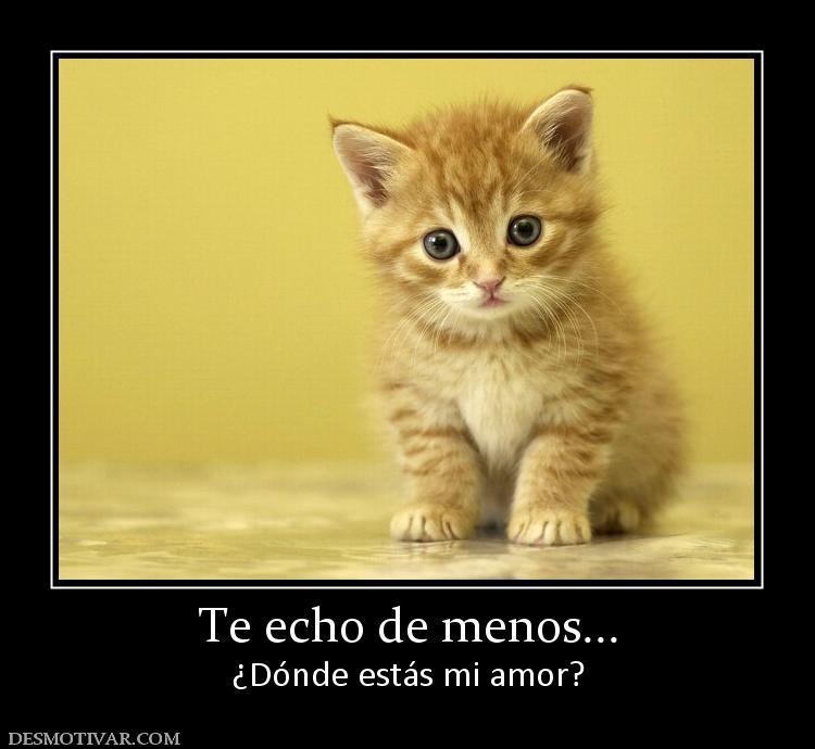 Desmotivaciones Te Echo De Menos Dónde Estás Mi Amor