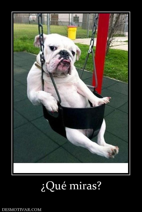 Etiquetas: Perros Animales Graciosos Fotos