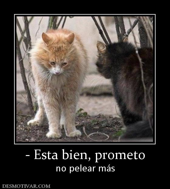 para no pelear Images - Frompo