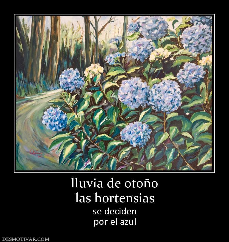 Desmotivaciones lluvia de oto o las hortensias se deciden por el azul - Cuidados de las hortensias ...