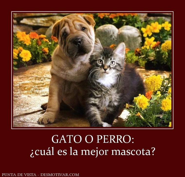 Desmotivaciones gato o perro cu l es la mejor mascota - Cual es la mejor freidora ...