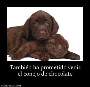 También ha prometido venir el conejo de chocolate