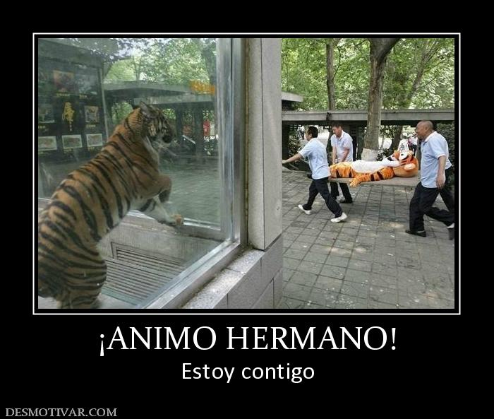 ANIMO HERMANO! Estoy contigo
